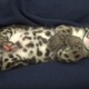 Как засыпает маленький леопард. Это удивительно!
