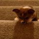 Как щенок щенка учил…