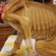 Когда эту собаку нашли на улице, на ней была только кожа и кости. Посмотрите на нее сейчас!