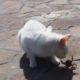 Кошки и крабы: первая встреча