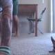 Милая собачка чихуахуа занимается йогой со своим хозяином