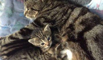 Когда от мамы кошки забрали ее котят, она пошла на отчаянные меры