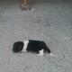 Этого новорожденного щенка выбросили на улицу. Вот, как он выглядит сейчас