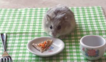 Крошечная пицца для крошечного хомячка