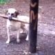 Самые забавные собаки, которых вы когда-либо видели!
