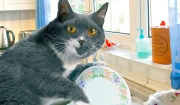 Кошка Бася любит мыть посуду. Незаменимая помощница по хозяйству!