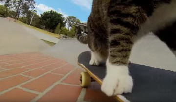 Уникальный кот-скейтбордист демонстрирует невероятные трюки