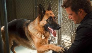 Эта собака достойна Оскара. Это просто невероятно!