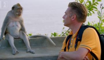 Как обезьяны воруют вещи. Это нужно видеть!