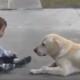 Как эта милая собака нашла общий язык с ребенком, страдающим синдромом Дауна?