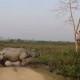Носорог загнал человека на дерево