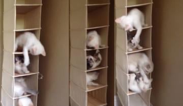 Вот что случается, когда пятеро котят хотят покататься на качелях