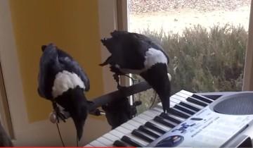 Музыкальные вороны взорвали интернет!