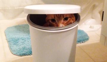 Черный кот Коул наблюдает за тем, как его непутевый брат забирается в мусорное ведро