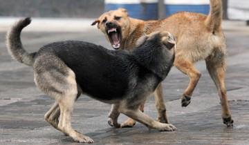 Эти собаки дерутся, посмотрите, что сделает кошка! Это невероятно!