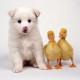 Самые крохотные, милые и пушистые детеныши домашних животных