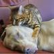 Кот проводит сеанс гипнотерапии собаке. Увидите, умрете со смеха!