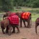 Посмотрите, как эти милые слонята играют в футбол!