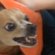 Собаки, которые не любят принимать ванну. Их реакция бесценна!