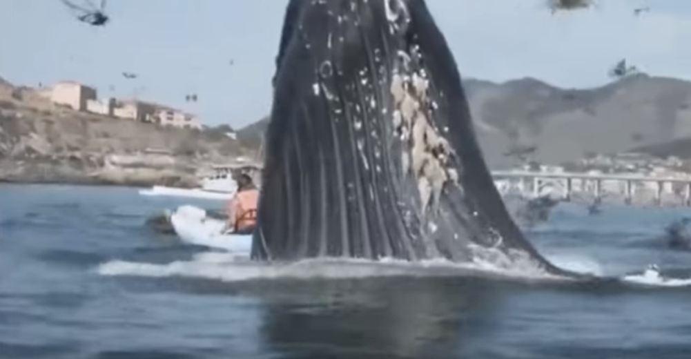 кит прыгнул на лодку с людьми