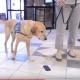 Эту милую собаку нельзя погладить, даже если очень хочется