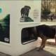 Этот автомат позаботится о бездомных животных