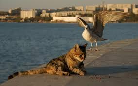 Чайка оставила кота без обеда
