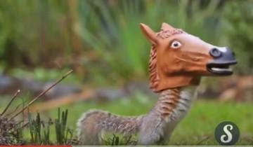 Как только вы увидите, почему эта белка пляшет с лошадиной головой, вы будете поражены!