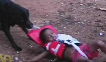 Собака думает, что спасла ребенка, но что же она сделала на самом деле?