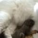 Заботливая кошка стала мамой для осиротевшего бельчонка