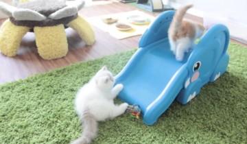 Как ведут себя котята на детской горке?