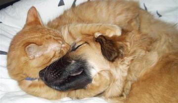 Больная собака вернулась домой из клиники. Реакция кота на ее возвращение бесценна!
