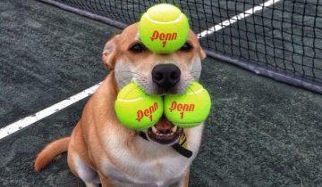 Собака, о которой мечтает каждый хозяин!