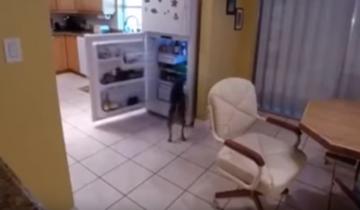 Что будет, если собака проголодалась, а хозяина нет дома?