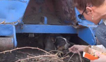 Что случилось с собакой после того, как она 11 месяцев прожила под мусорным контейнером?
