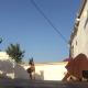Собака встретила хозяина, которого долго не видела. Ее радости нет предела!