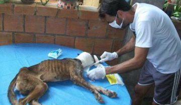 Эту бродячую собаку уже доедали черви, но ее спас удивительный человек