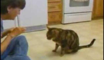 Кто говорил, что у кошек отсутствует интеллект?