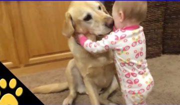 Собаки, которые защищают детей. Это не просто домашние питомцы, а настоящие друзья!