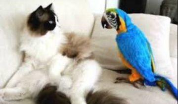 Попугаи хотят подружиться с котами