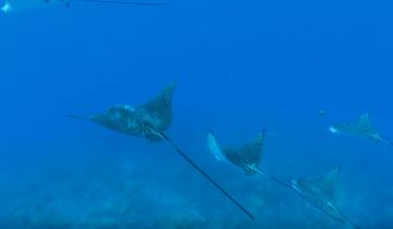 Неземная красота подводного мира