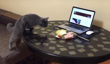 Как отучить кота лазить по столу?