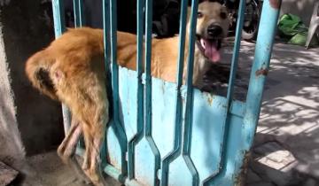 Собака застряла в заборе, и ей никто не мог помочь!