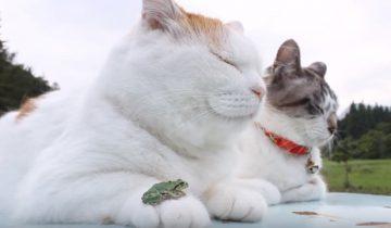 Кошка, которая познала дзен