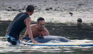 Они услышали отчаянный крик детеныша кита. Что же произошло дальше?