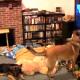 Собака смотрит свой любимый мультик, но как забавно она это делает!