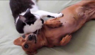 Кошка помогает собаке успокоиться