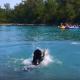 Собака учится плавать. Но как смешно она это делает!