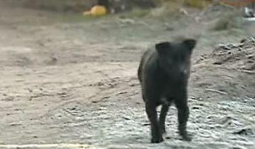 Маленький щенок спас 3-х летнюю девочку от холода