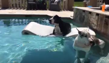 Эти две дамы из высшего общества охлаждаются в бассейне